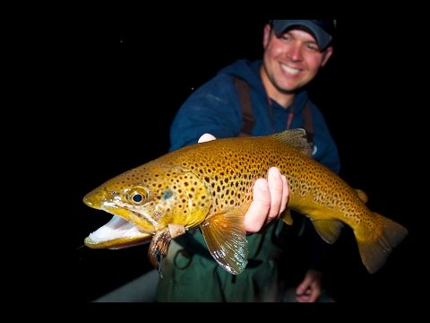 Hook Shots: Mousing Nighttime Browns