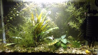 Cleaning up an overgrown planted fish tank