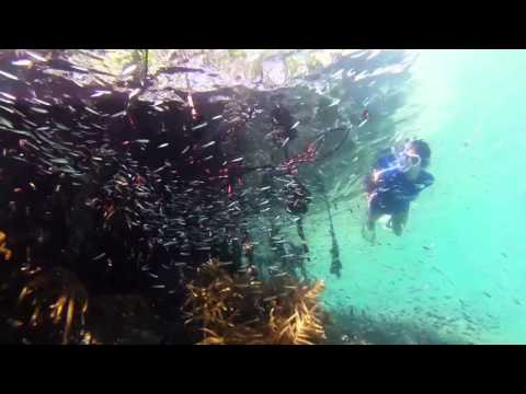 Cobie Smulders Explores Belize's Hidden Treasures with Oceana
