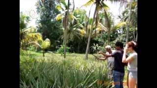 Ayesh de Silva  экскурсии по Шри-Ланке 2013 год(Сказочная Шри-Ланка подарит Вам незабываемые впечатления и настроение. Профессиональный гид Шри-Ланки..., 2013-08-01T08:33:50.000Z)