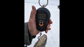 Озеро Уелги 11 километр карась от 200 до 500 грамм
