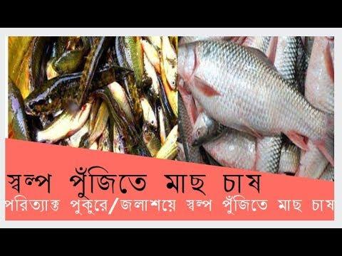 Fish Farming with Little capital । স্বল্প পূঁজিতে  পরিত্যাক্ত ছোট পুকুরে/জলাশয়ে মাছ চাষ ।খামার বাড়ি