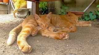 暑いので日陰で休んでいたら次々と猫がやって来て暑苦しくなった子猫