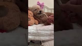 동결건조 열빙어간식 처음만난 강아지 | Dog's fi…