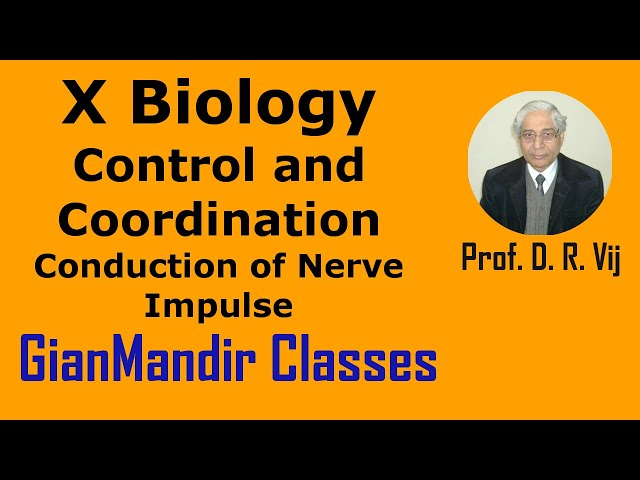 X Biology | Control and Coordination | Conduction of Nerve Impulse by Manjit Ma'am