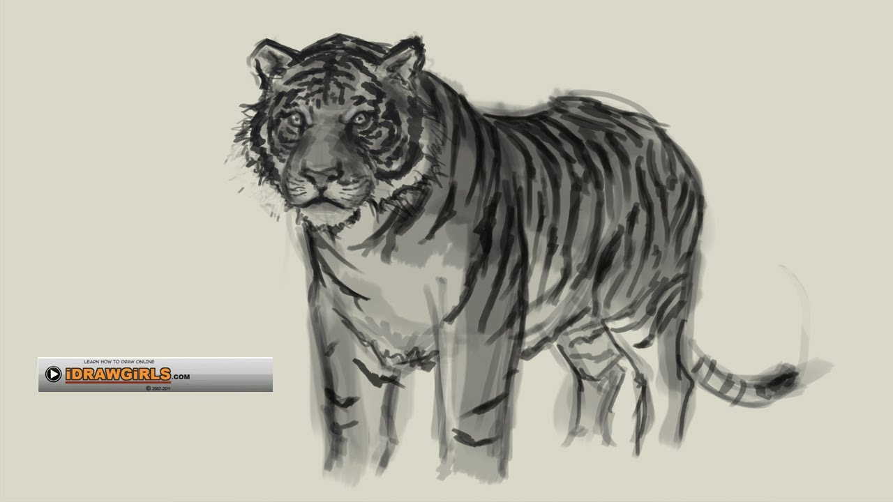 Uncategorized Tiger Drawings how to draw tiger youtube