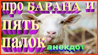 Анекдот про барана и пять палок смешной ZINTARI TV