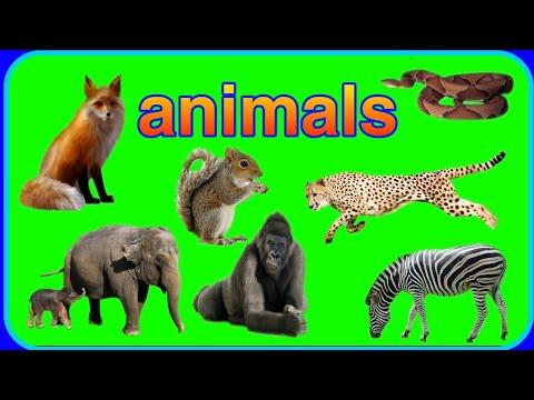 Learn Name Of Animals(प्राण्याची नावे) In Marathi And English
