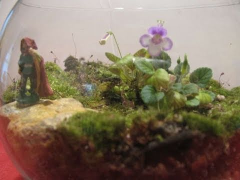 Make A Moss Terrarium Youtube