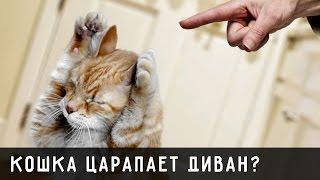 Как отучить котенка царапать диван? Купить когтеточки для кошек!(Купить когтеточки для кошек вы можете здесь: http://www.kitty-campus.com/#!kogtetochki/i2u61 Настенные когтеточки сэкономят..., 2015-11-20T23:58:04.000Z)