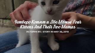 Ep. 3 КОТЯТА ПЕРВЫЙ РАЗ САМИ КУШАЮТ КОНСЕРВУ   KITTENS FIRST GROWNUP FOOD   CAT VIDEO