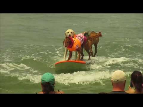 Surfdog2016HD