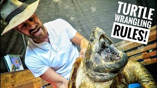 we-found-40-turtles-in-the-aquascape-ponds