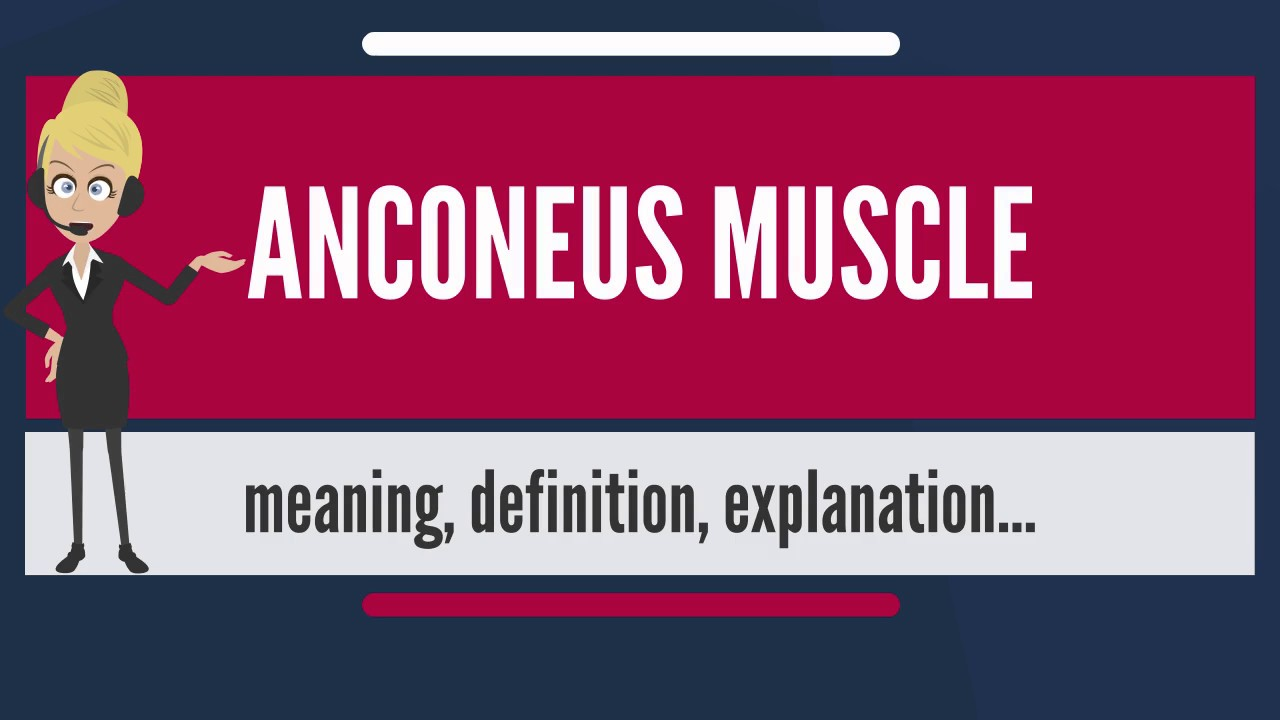 What is ANCONEUS MUSCLE? What does ANCONEUS MUSCLE mean? ANCONEUS ...