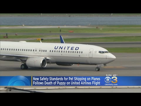 New Safety Standards In The Works For Pet Shipping On Planes