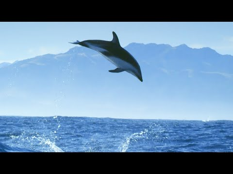 Incredible Dolphin Moments | BBC Earth