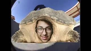 reid looks like a turtle y n