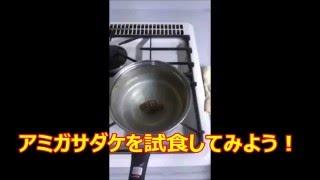アミガサダケ(モリーユ)を料理・試食しよう!モリーユ料理!(morel)