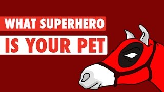 Your Pets Become SuperHeroes!
