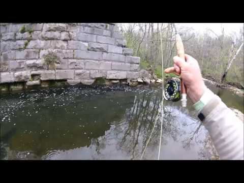 Spring Small Creek Fly Fishing for Rock Bass and Smallmouth