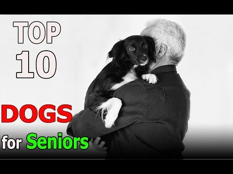 Top 10 dog breeds for seniors | Top 10 animals