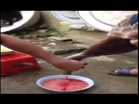 cách cắt tiết vịt siêu sạch