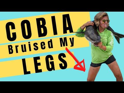 Sight Fishing Cobia Chesapeake Bay BRUISED MY LEGS!!