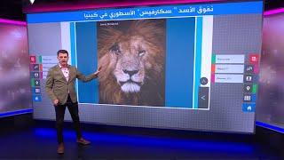 نفوق الأسد سكارفيس أحد أشهر الأسود في إفريقيا