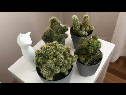 My Succulent Collection In Serbia Update September 2018
