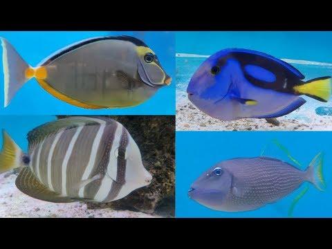 Marine Fish At World Of Fish