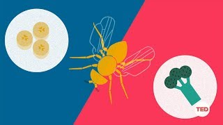 How you can make a fruit fly eat veggies | DIY Neuroscience, a TED series