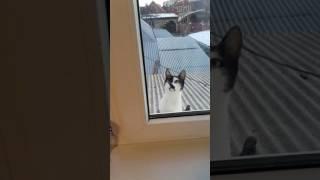 Кошка пришла домой