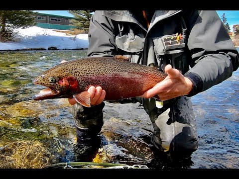 Fly Fishing The Blue River (Silverthorne, CO)