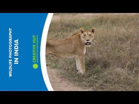 wildlife-photography-in-india-|-wildlife-photography-course-|-career-and-passion-(updated)