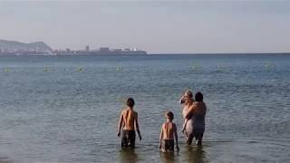 Дельфин - охота возле берега. #АНАПА #ВИТЯЗЕВО #ДЖЕМЕТЕ