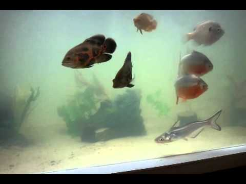 Update 270 plywood fish tank youtube for Plywood fish tank