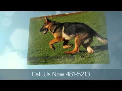 Dog Kennels Virginia Beach Va Call Now 757-481-5213