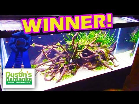 Aquascaping contest winners aquatic experience 2015 youtube for Dustins fish tanks