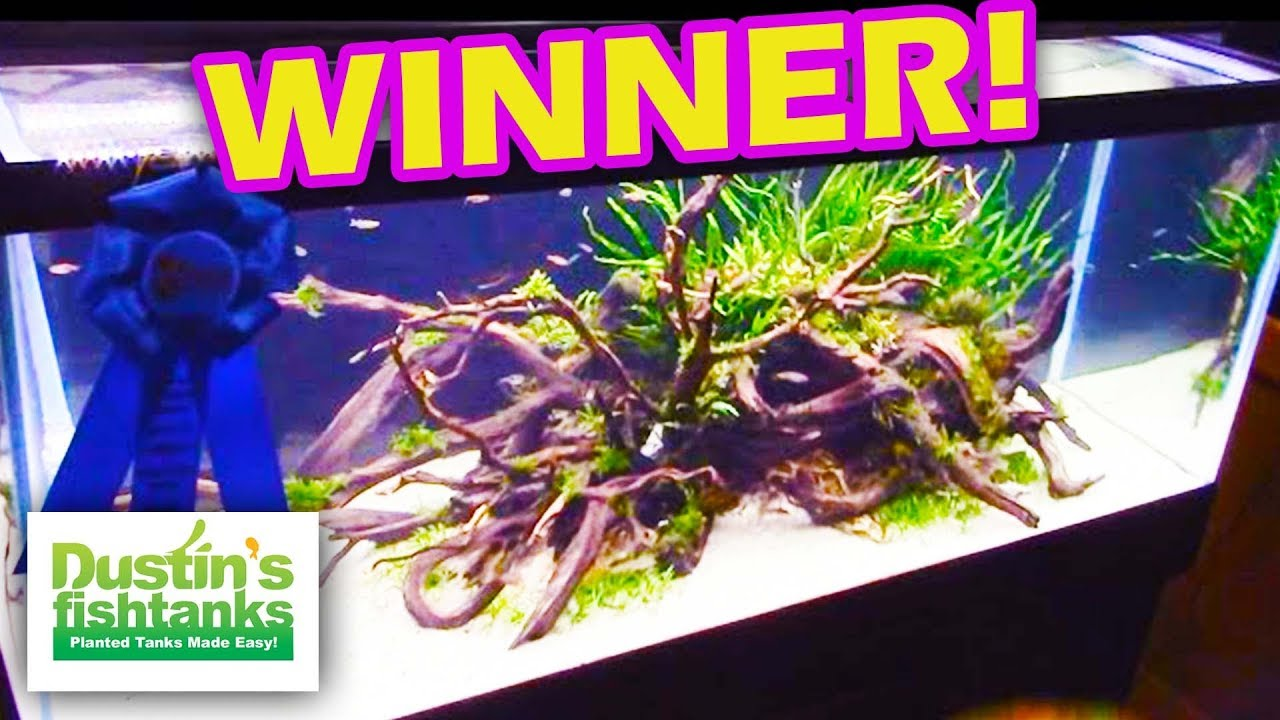 Aquascaping Contest Winners Aquatic Experience 2015 Youtube