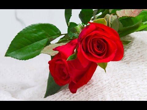 beautiful-flowers---beautiful-flowers-images
