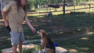 Feral Dog gets a new life Solid K9 Training