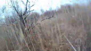 охота на фазана с дратхааром 1