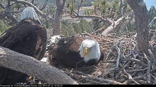 4-22-19 Big Bear Eagles- 3rd Fish Shadow Brought in Today