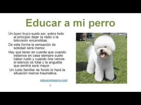 C mo educar a un perro a hacer sus necesidades youtube - Educar en casa ...