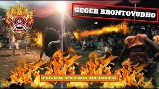 GEGER brontoyudho Solah Barongan | JARANAN PUTRO TIGER BUDOYO LIVE KARANGSARI BLITAR