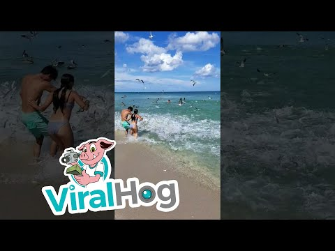 Mullet Fish In Miami    ViralHog