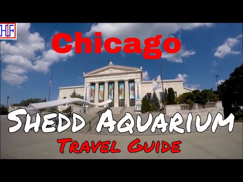 Chicago | Shedd Aquarium| Tourist Attractions | Episode# 6