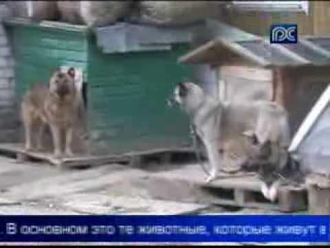 Вопрос: Какие общества по защите животных существуют?