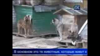 Общество защиты животных «Велес» начало маркировать бездомных животных.