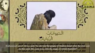 Animals In Islamic Tradition - The Creatures Of Allah - The Crow